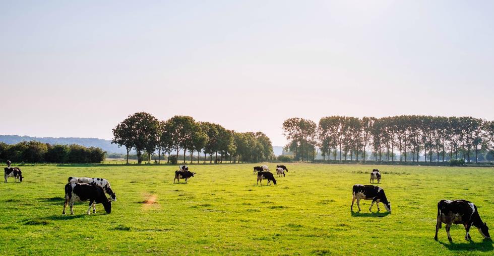 Sector Spotlight American ranches